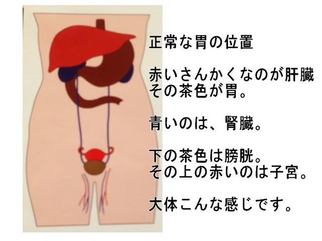 腰痛の原因はコア(体幹)が弱ったから|胃下垂が腰痛の原因に