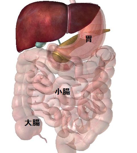 胃小腸大腸